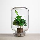 Plant & Vaas