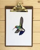 A4 poster kolibrie