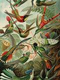 KEK amsterdam wood print exotic birds