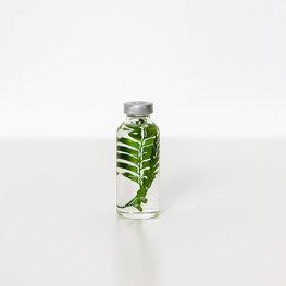 Slow Pharmacy plant specimen small  011