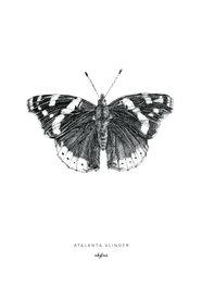 Inkylines Print Atalanta Vlinder