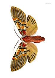 Liljebergs print vlinder Anaxita sannionis, landscape
