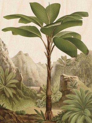 KEK Amsterdam print op hout Bananen boom