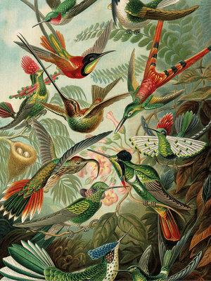KEK Amsterdam print op hout Exotic Birds
