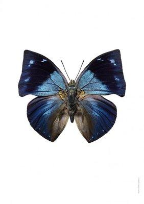 Liljebergs print vlinder - Memphis offa