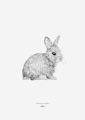 Inkylines Print Europees konijntje