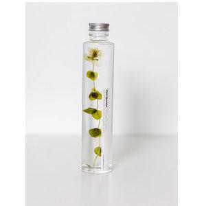 Slow Pharmacy plant specimen large 005