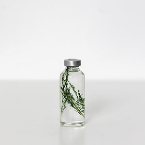 Slow Pharmacy Bottle plant 013