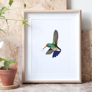 kolibrie in lijst