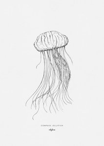 Inkylines compass jellyfish print A5