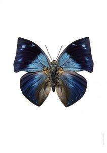 Liljebergs print vlinder memphis offa